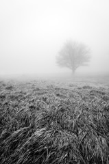 solitary and lonley tree in black and white
