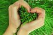 Obrazy na płótnie, fototapety, zdjęcia, fotoobrazy drukowane : Hands hugging green fresh grass in shape of heart