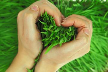 Hands hugging green fresh grass in shape of heart