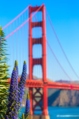 Golden Gate Bridge San Francisco purple flowers California