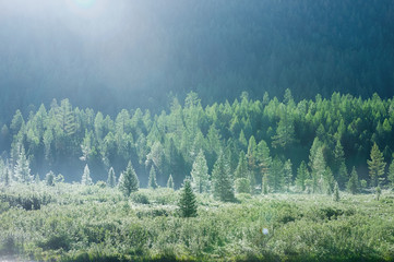 Mountain forest in early summer morning dew
