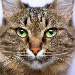 Portrait of green-eyed cat