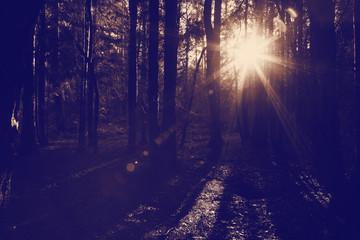 sunlight woods