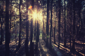 sun flare forest