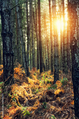 bright sunshine forest