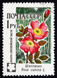 Postage stamp Russia 1960 Dog Rose, Rosa Canina
