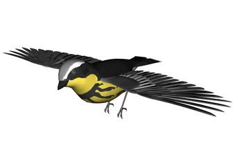 Flying Warbler
