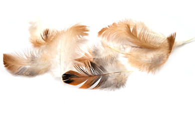 feathers on a white background