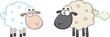 White Sheep And Farting Black Head Sheep