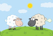 White Sheep And Farting Black Head Sheep On A Meadow