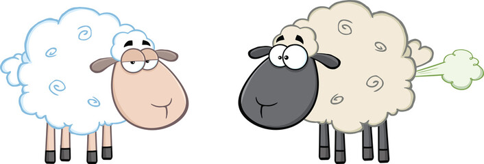 White Sheep And Farting Black Head Sheep