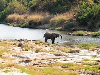 Nkhotakota elephant