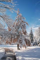 Weg durch verschneite Winterlandschaft