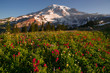 Cascade Range Rainier National Park Mountain Paradise Meadow