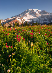 Cascade Range Rainier National Park Mountain Wildflowers