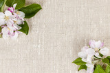 Linen background with apple blossoms