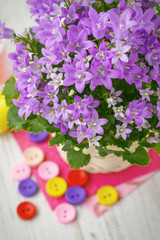 Campanula bouquet with colorfull buttons