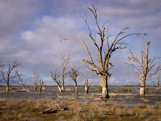Lake Woolpolool, Calperum, South Australia