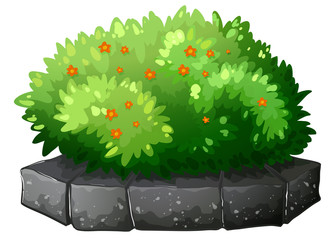 A flowering plant above the gray stone