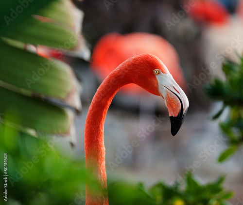 Tuinposter Flamingo Close up shot of a flamingo profile.
