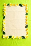 Yellow plumeria.frame.on yellow green background