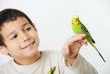 Portrait of a kid girl with her domestic parrot