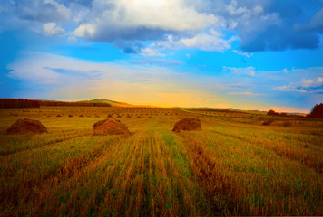 Autumn field with the harvested hay