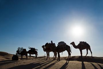 Méharée dans le Grand Erg Oriental - Tunisie