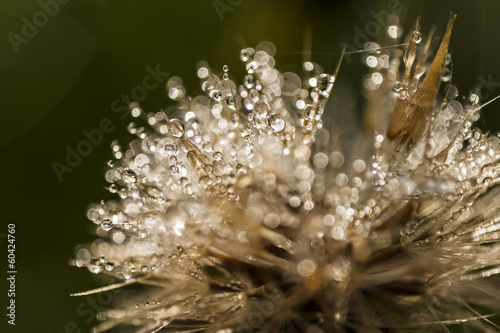 summer morning dew on a plant