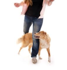 Hunde Training – Agility