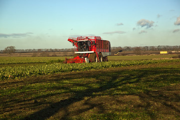 Time to harvest the sugar beet. Lincolnshire