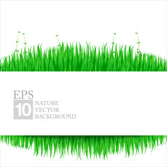 Nature background with green grass 02