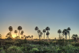Sunrise on El Palmar National Park, Argentina