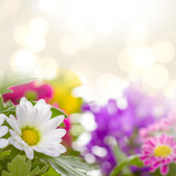Flower background. Real photographs of beautiful flowers.