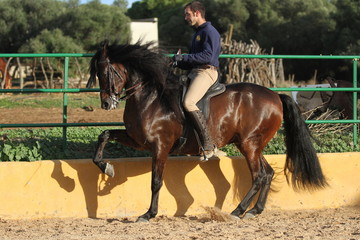 Spanischer Reiter auf dem Reitplatz