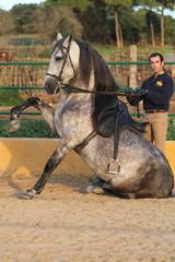 Sitzendes Pferd hebt Vorderbein
