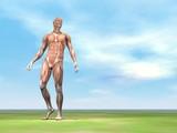 Male musculature walking - 3D render poster