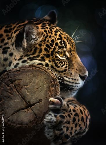 Papiers peints Tigre Jaguar