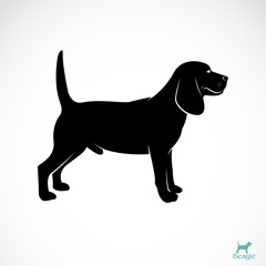 Vector image of an dog beagle