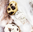 Beautiful Quail Eggs on  white feathers background, macro. HQ ph
