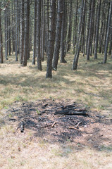 burned fire place in forest