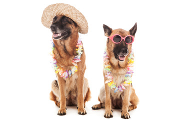German Shepherd in Hawaiian style