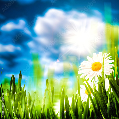 Daisy flowers on the meadow, seasonal backgrounds for your desi