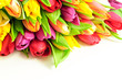 Tulips Mix Rainbow Colours on Top White Background Flat