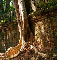 Tree in Angkor