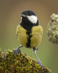 Retrato pájaro