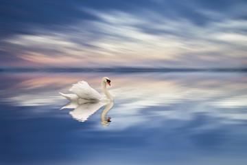 elegancia en el agua
