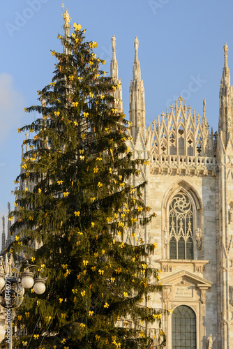 Christmas Tree and Minster, Milan