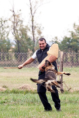 Dog trainer with a german shepherd