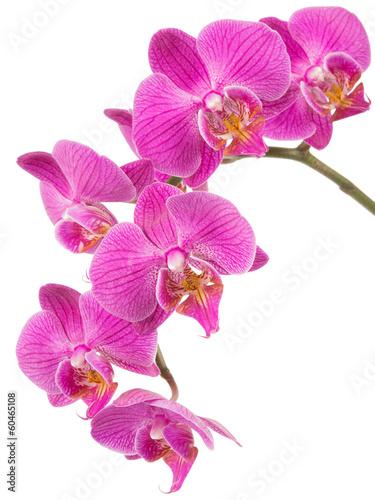 Zdjęcia na płótnie, fototapety na wymiar, obrazy na ścianę : Orchid